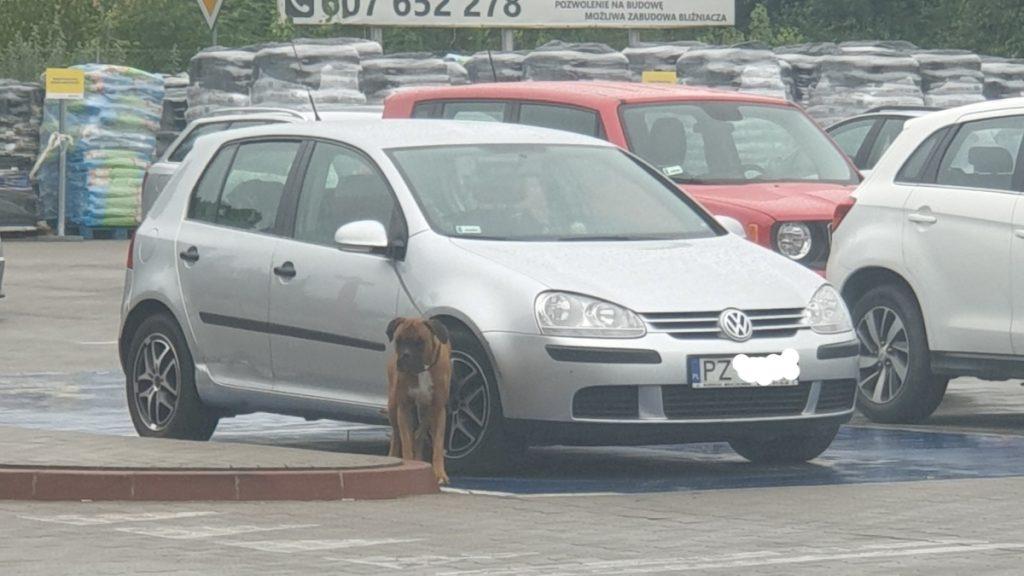 pies czekał tak się nie robi