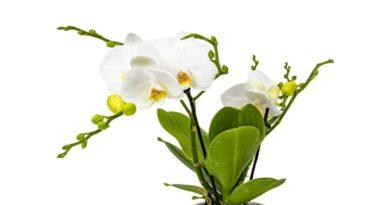 Leroy Merlin też ma promocję na kwiaty